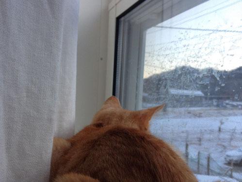 ひらいみも ブログ 初雪
