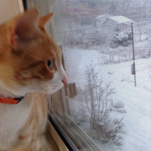 ひらいみも ブログ 雪