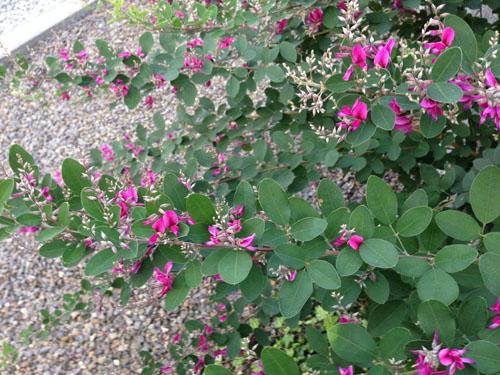 ひらいみも ブログ 秋の花