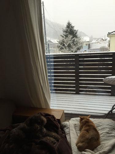 hiraimimo blog snowing